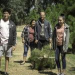 Bringing back the tree